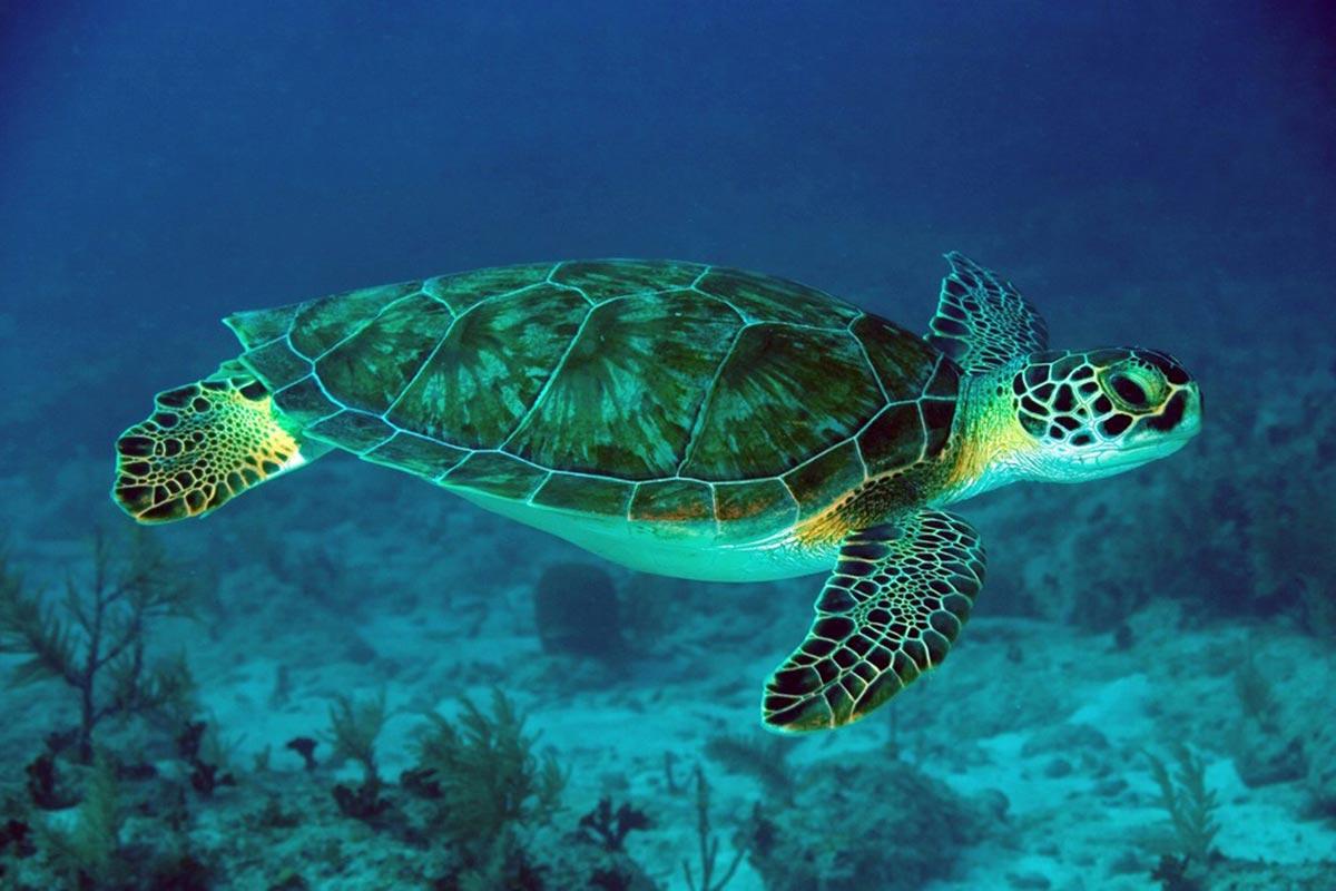 Comment élever une tortue d'eau?